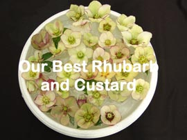 Helleborus�x hybridus `Pine Knot Select�Our best Rhubarb and custard�